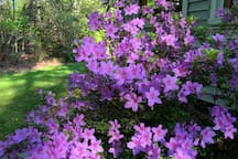 The property features azaleas, rhododendrons, and roses, as well as fruit trees and berries