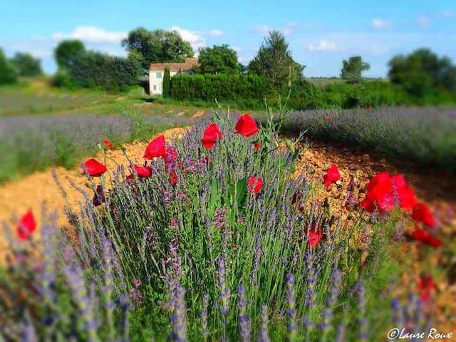 Mitten im Lavendel - entspannt urlauben