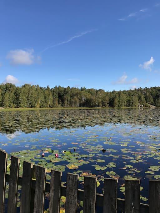 Den vackra sjön, som om sommaren är täckt av näckrosor.