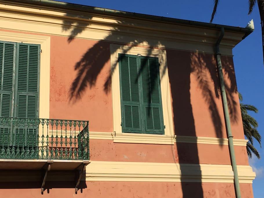 Ombra di palma centenaria