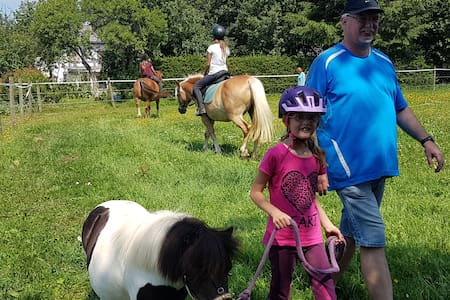 DG Ferienwohnung in der Eifel mit Pony Wanderungen