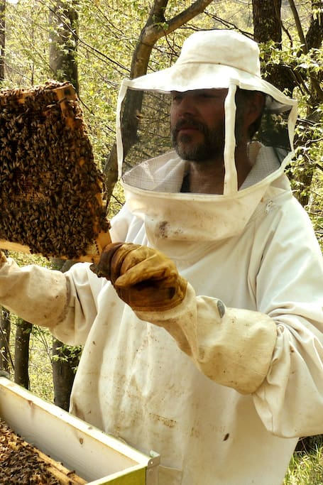 Taking a frame out of a beehive