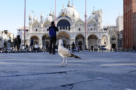 Live Venice: only for long stay