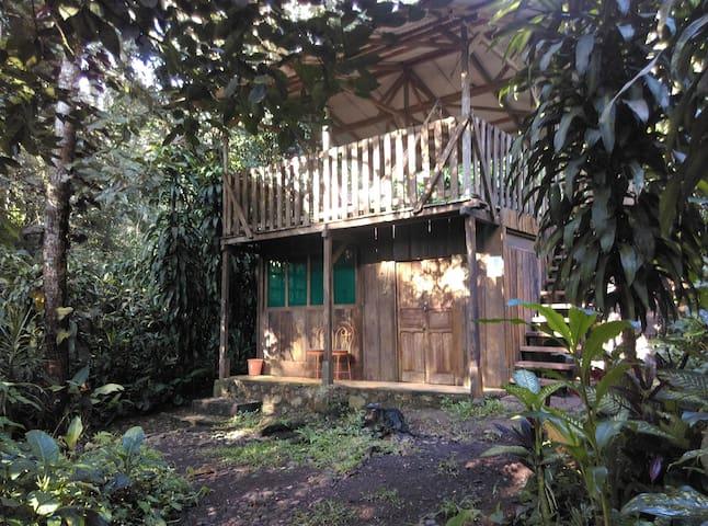 Cabaña en medio de la selva