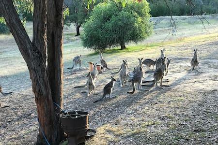 Tallarook kangaroo sanctuary - Tallarook - Dům