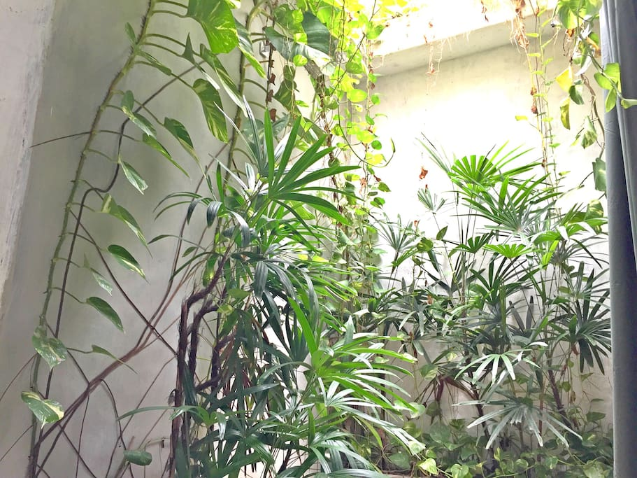 Jungle shower in the bathroom.
