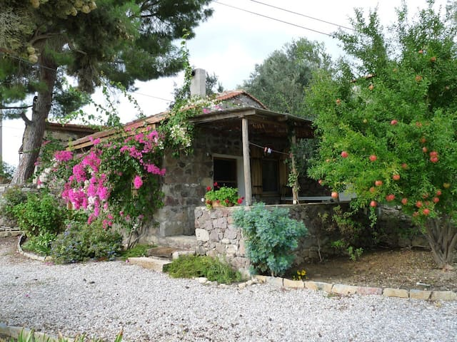 COTTAGE IN THE OLIVE FARM @ BADEMLİ - Bademli - Wikt i opierunek