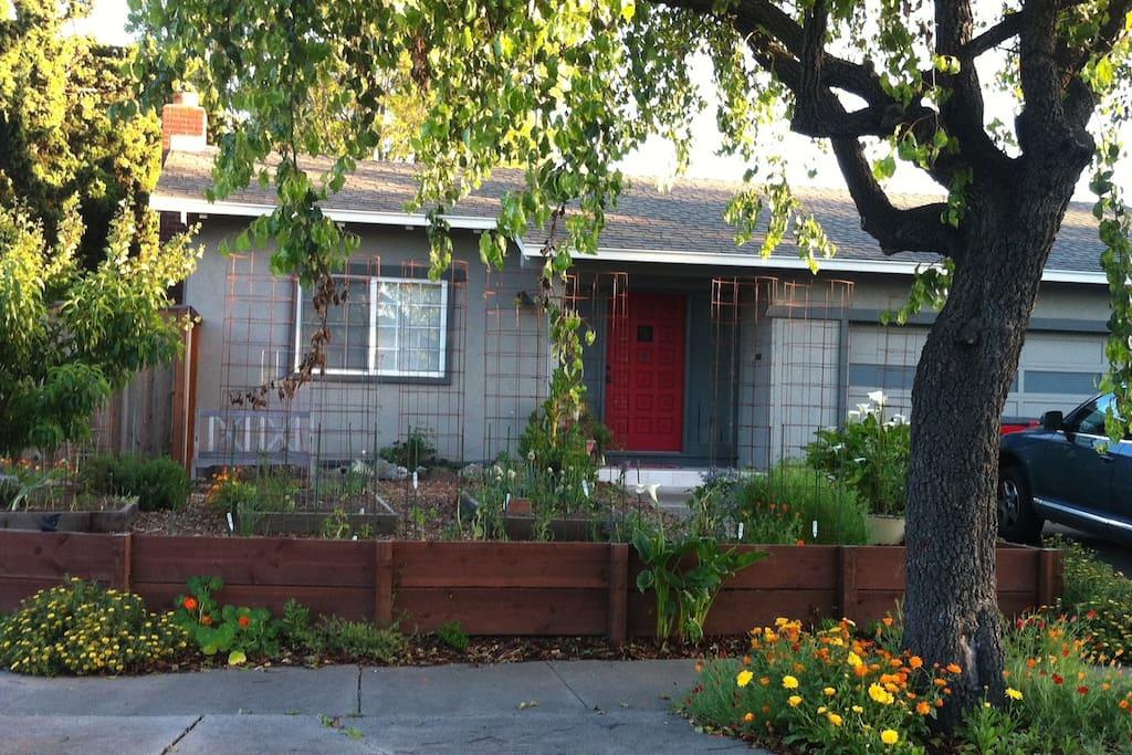 Front Yard/Garden