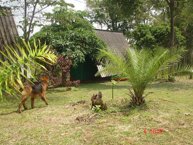 Jungle Zone, Bungalow 3