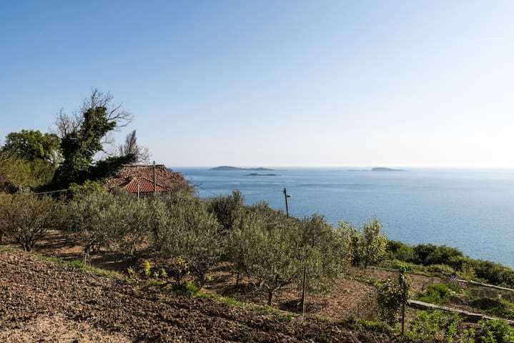 Mrkan studio - terrace & sea view - Mlini - Apartment