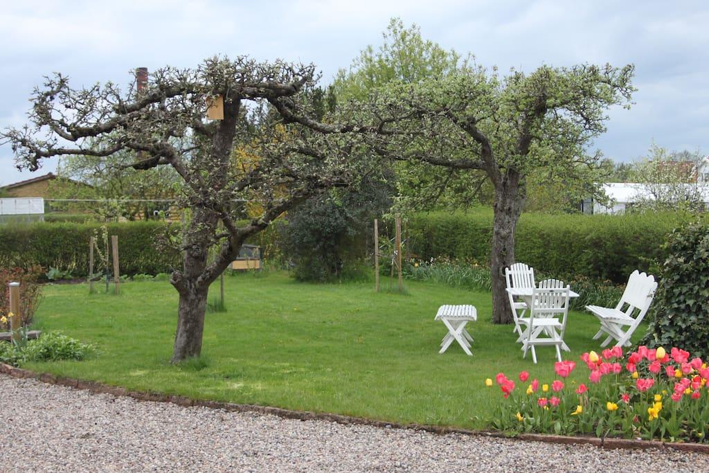 Härlig trädgård utanför fönstret. Njut under äppelträden!