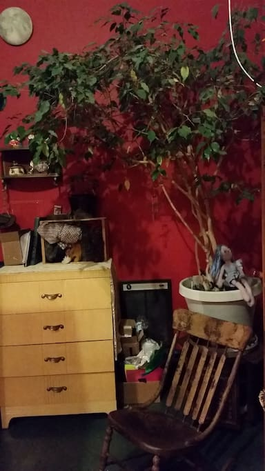 tree in room. yes. tree in room.