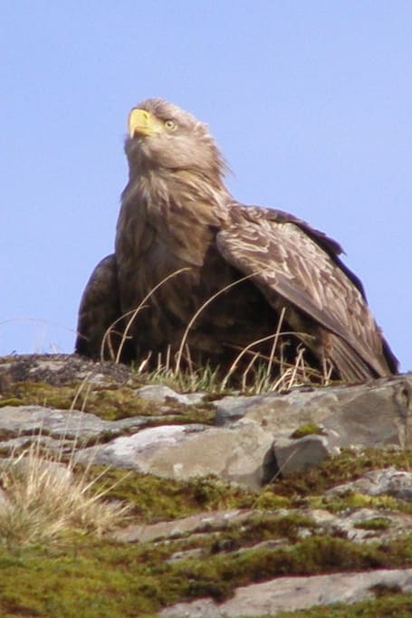 We have visits from the Sea Eagle and numerous other wildlife
