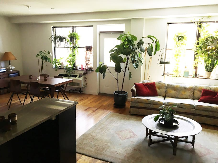 Bright sunny, open and spacious living and dining space with lots of indoor greenery and design furniture