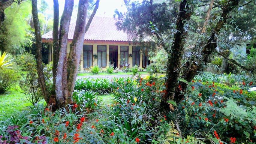 Misty Mountain Pine Garden Villa.
