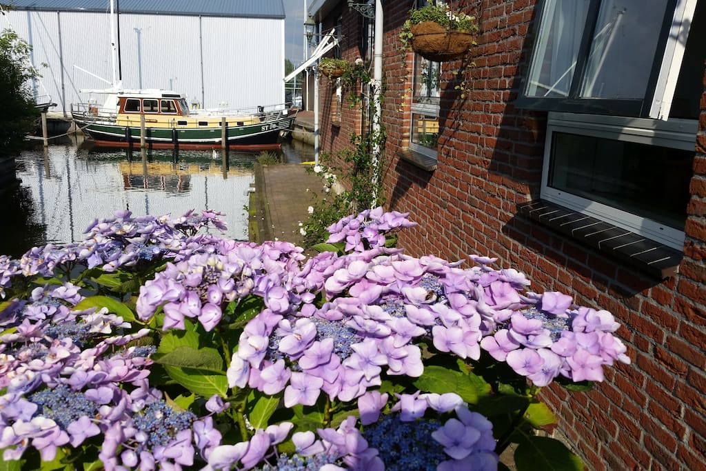 Flowers. Frisian Sun.