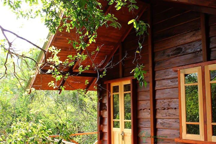 Thick Forest Sigiriya