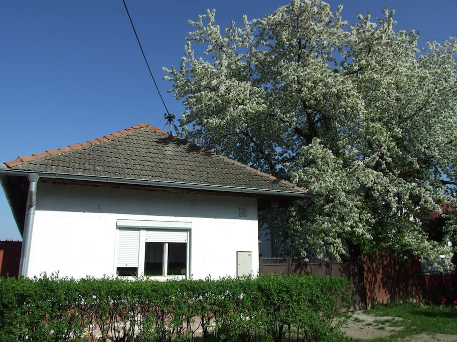 Cottage under a cherry tree :)