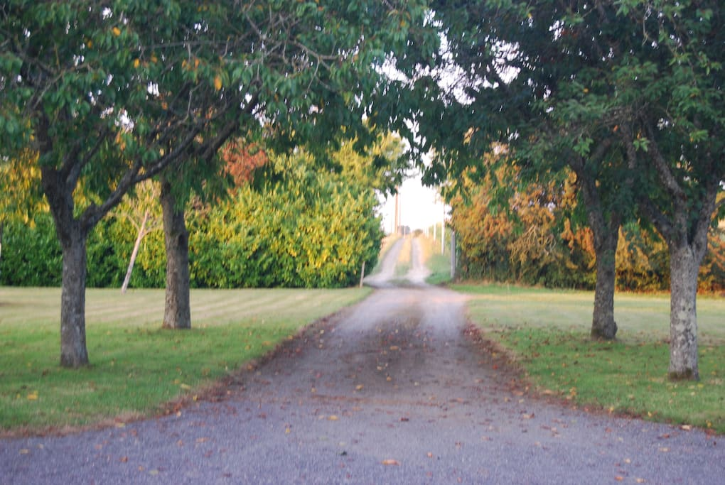 The drive leading to the house
