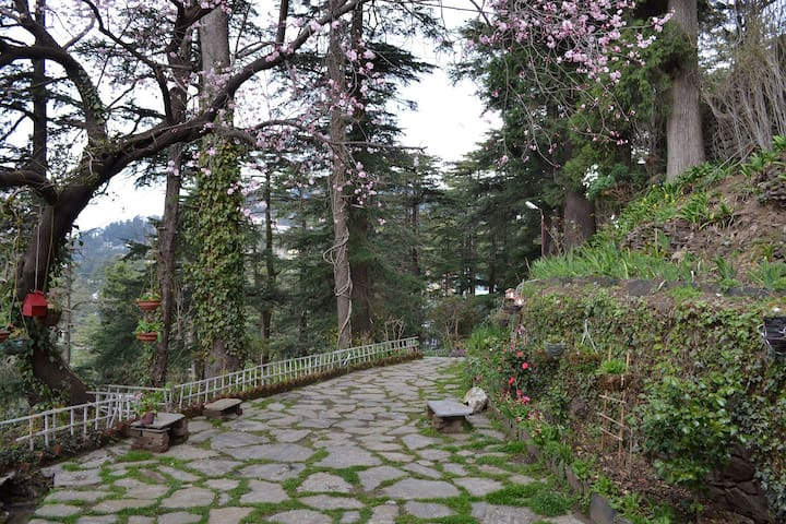 Sanjiv's Aira Home Retreat - Shimla - Bed & Breakfast