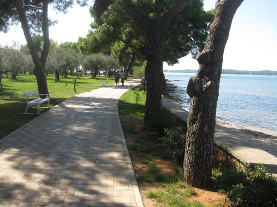 Walking in the park near the sea
