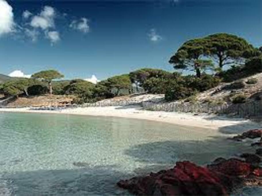 plages de palombaggia a proximité une des plus belle plage d'Europe
