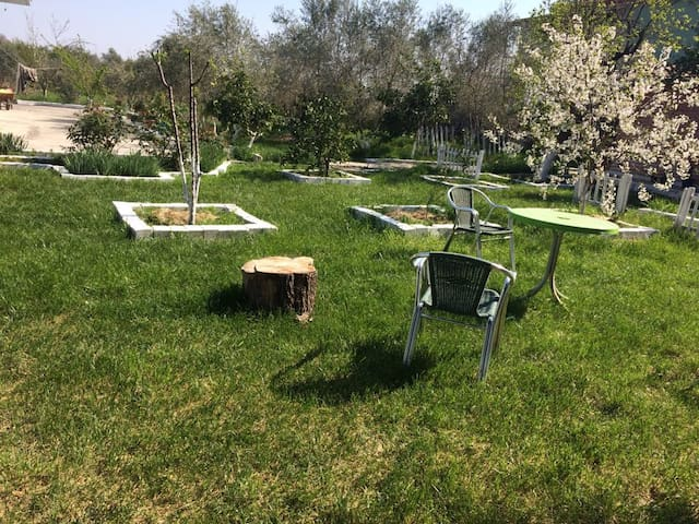 Camping in Lushnja.  near Berat, Apollonia,