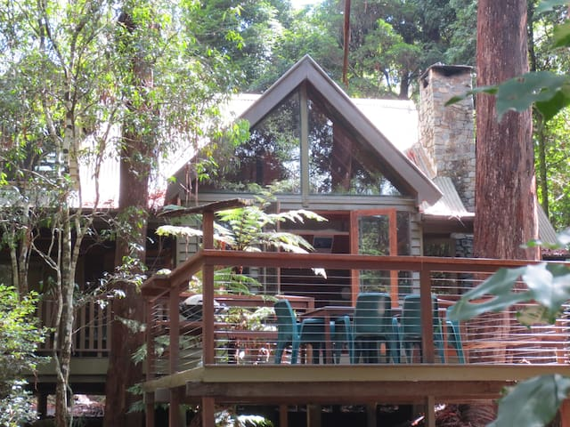 Coolgarra Bush House - Springbrook - Rumah