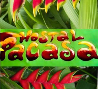 PaCasa Hostel - Shared Room - Bed 2