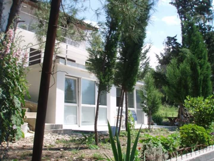 01 Apartment in pine forest