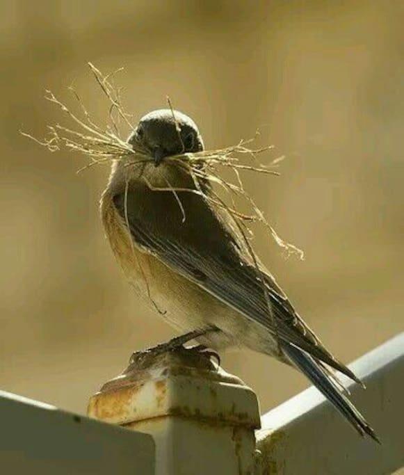 veel vogels te bewonderen