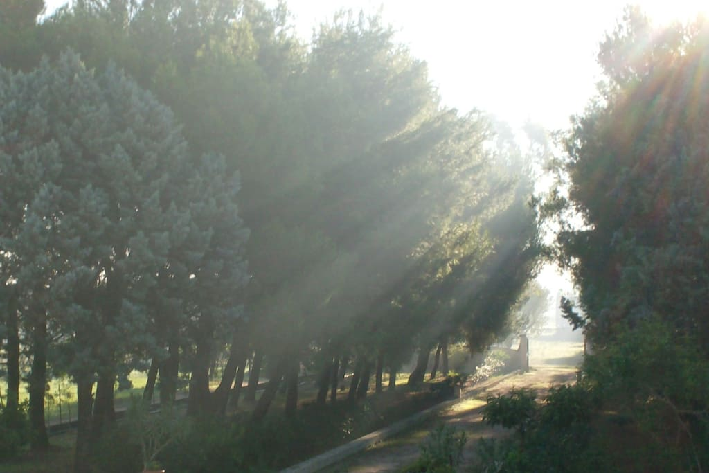 Entry path along the pinewoods - Viale d'ingresso con pinete