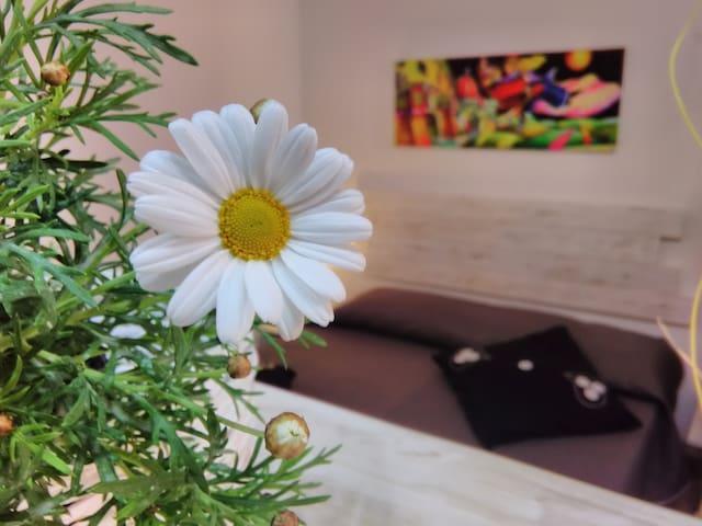 Suite Soleil - Altavilla Milicia - Apartment