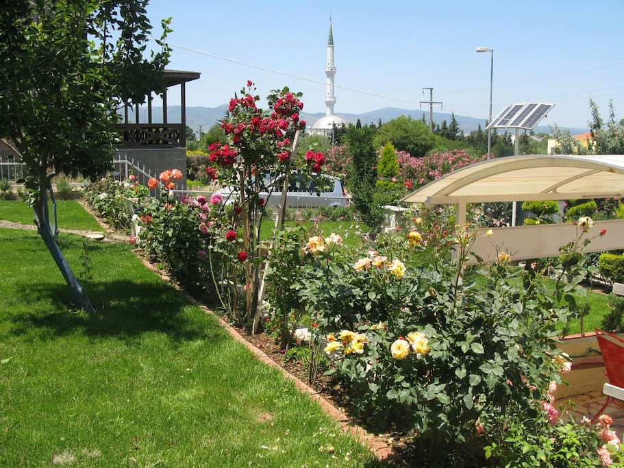 a view from the garden (Urla)