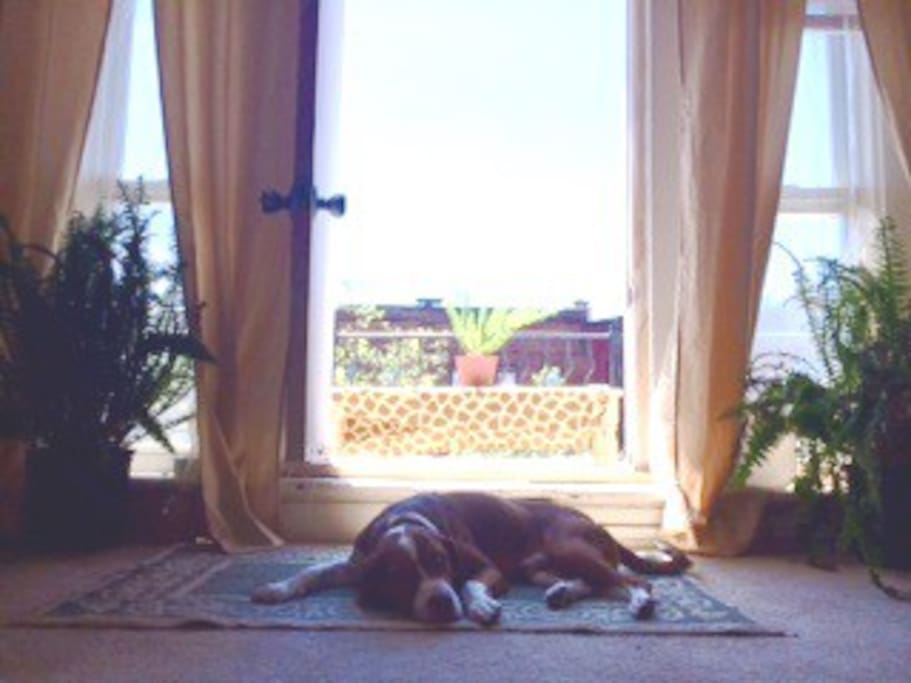 My dog enjoys the cool breeze from the balcony- its a perfect place to get fresh air.