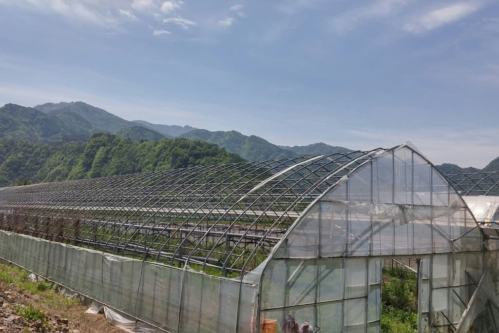 포도수확농장입니다. 아주 많이 있어요!