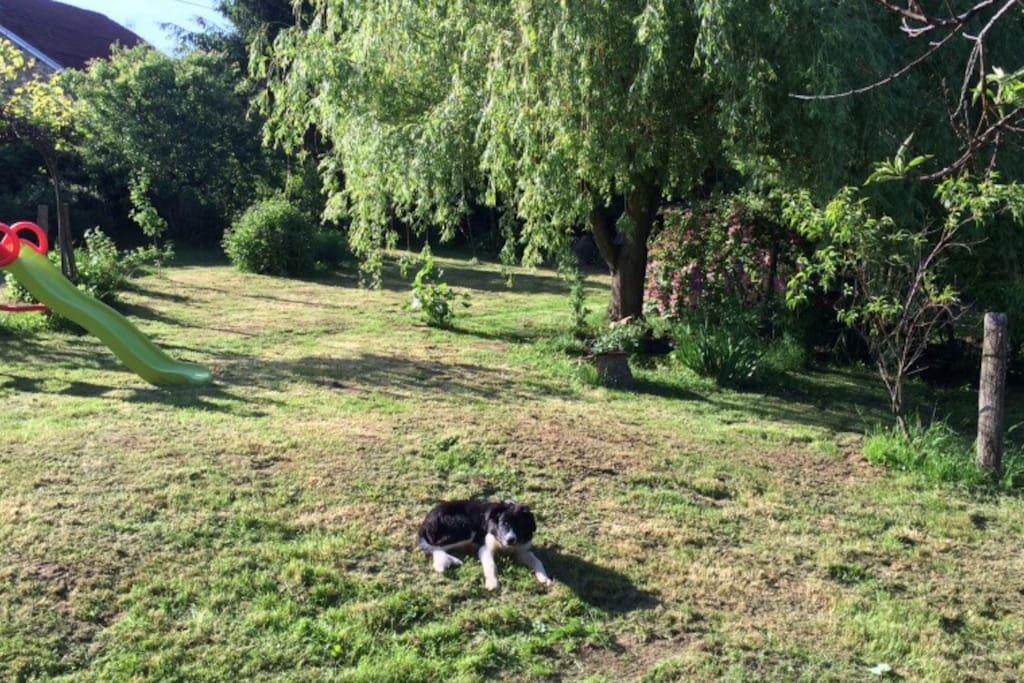 Jardin pour animaux à disposition chiens et chats etc