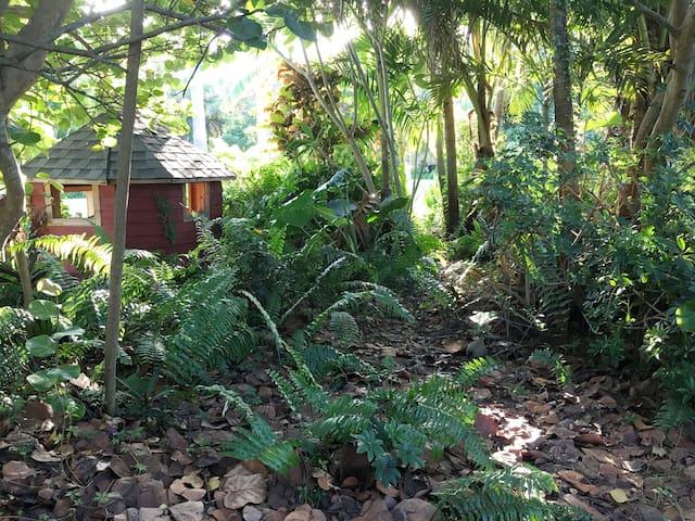 Jungle trail on property