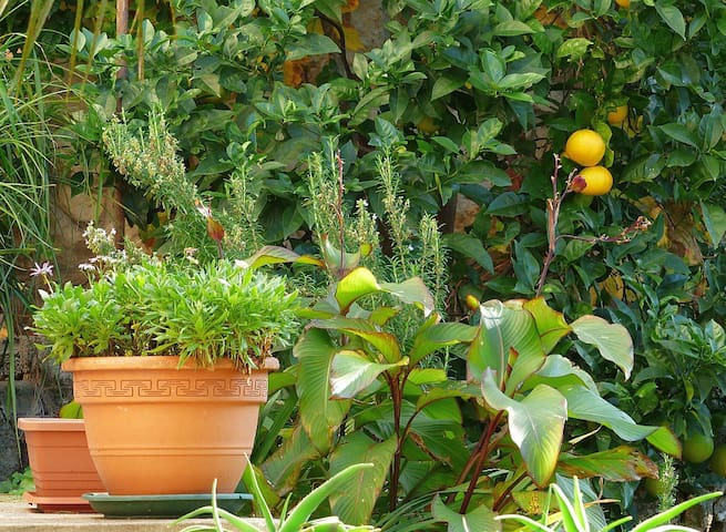Tihi Kut quiet place with a garden - Dubrovnik - Casa