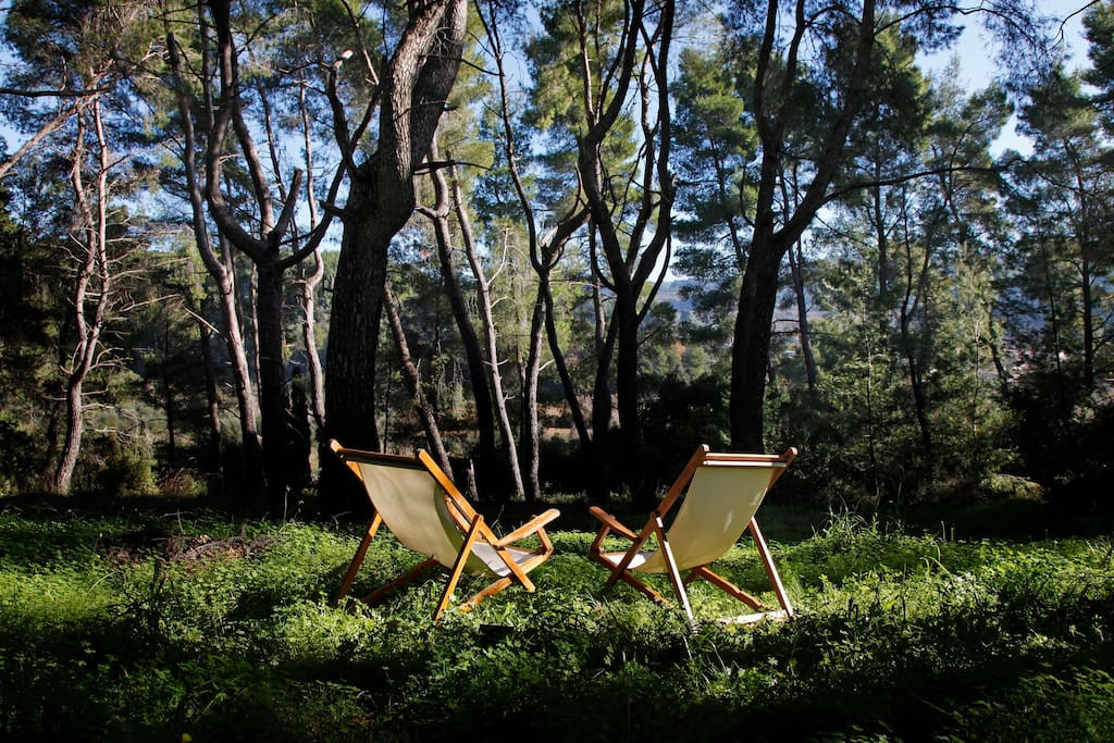 Relaxing in the estate's pine tree forest