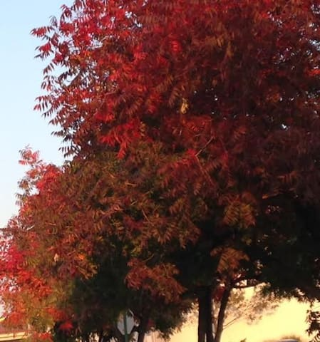 Fall is beginning to show its amazing colors...