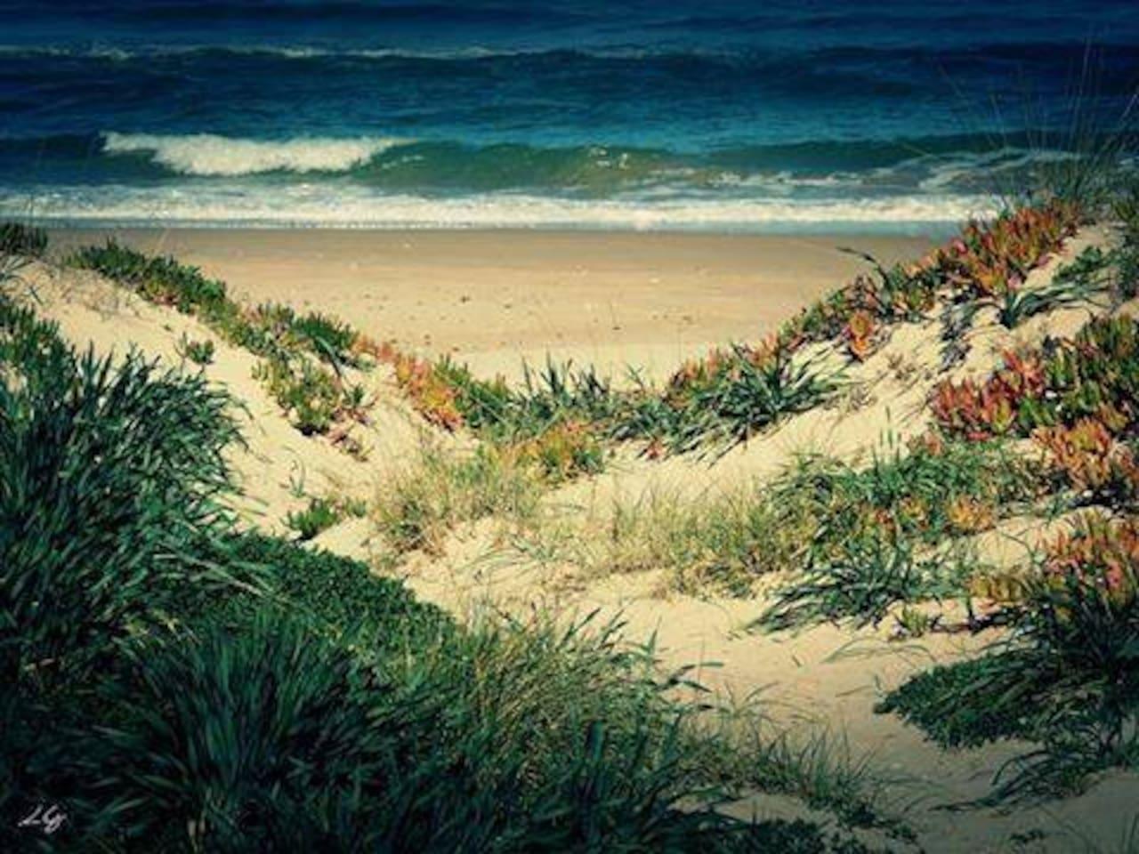 spiaggia con dune di sabbia e mare sotto casa