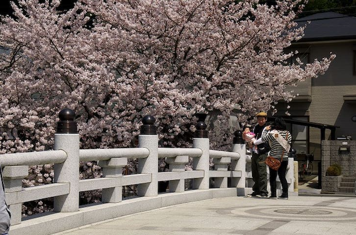 Sakura Full Cherry flower View JPTraditional House - Kaizuka-shi - Dom