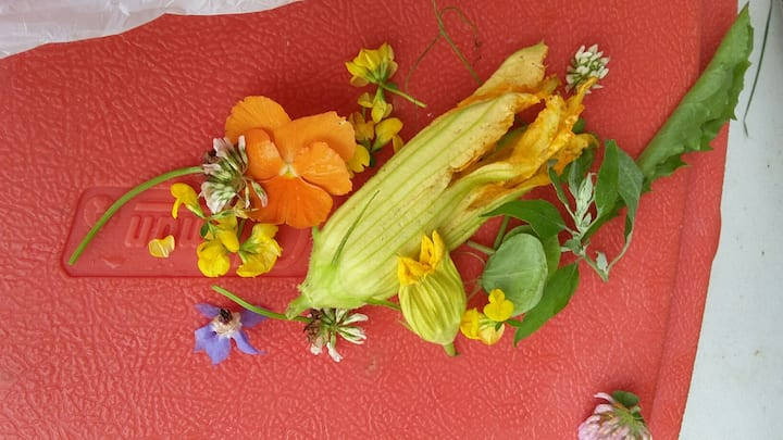Selection of edible flowers