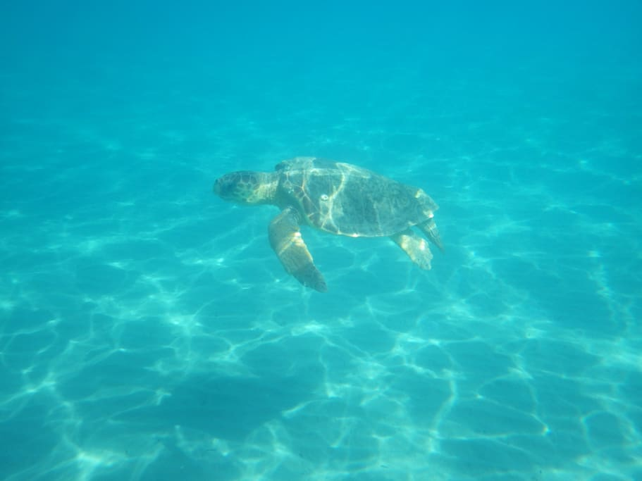 Swim with these beautiful creatures. They await just 2 minutes from your front door.