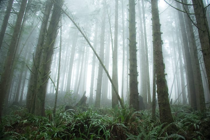 Fogged in on the forest trail