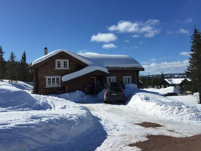Kvitebjørn