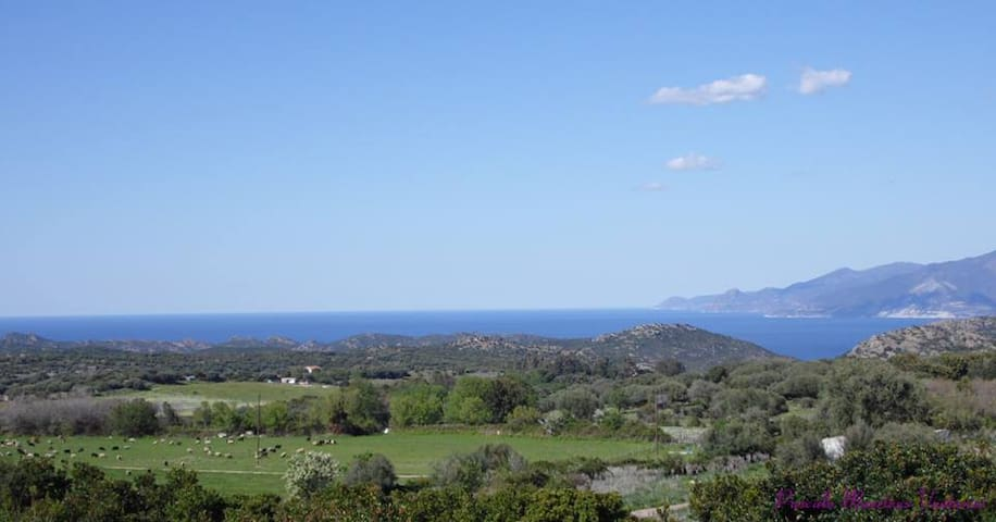 Bungalows at 20 minutes from SAINT FLORENT