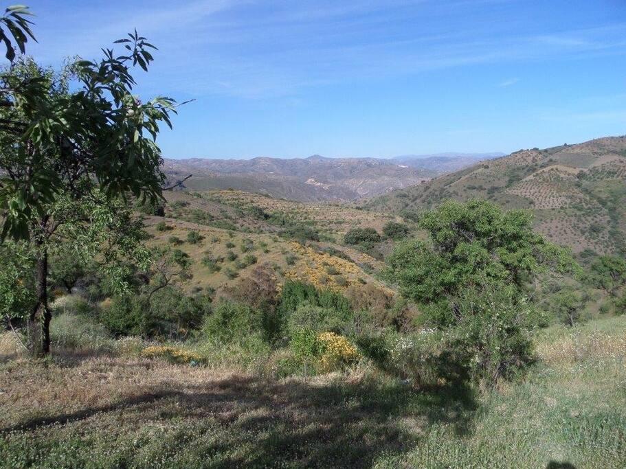 Vistas desde el cortijo / View from the Cortijo
