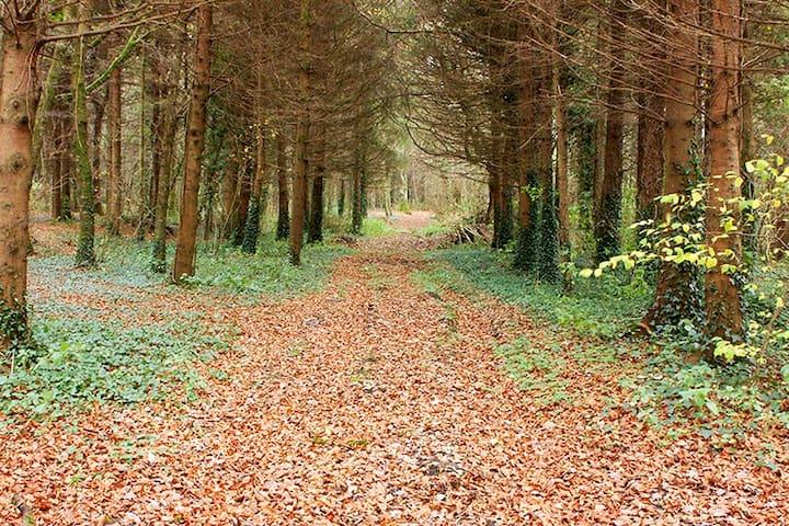 Donadea forest  quiet family home near Dublin